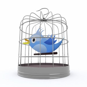blue bird inside the cage that chirps